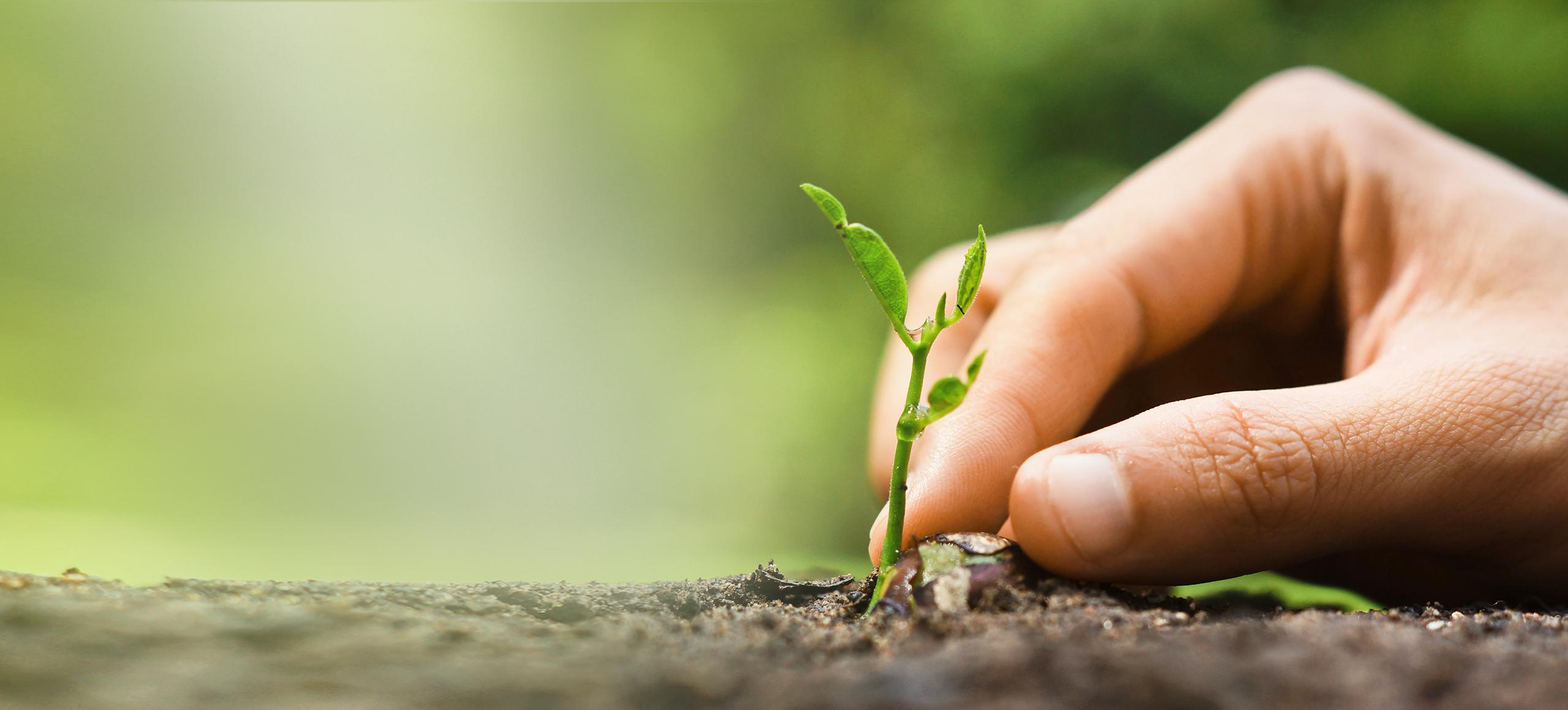 BRITA zwroty i recykling ręka roślina