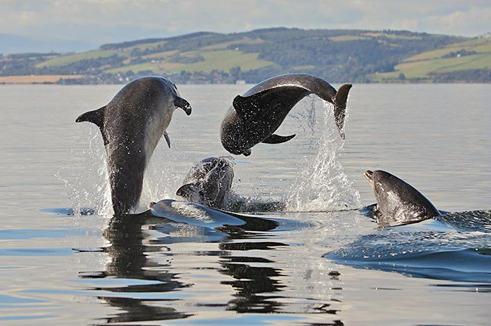 BRITA sustainability collaboration dolphins in sea
