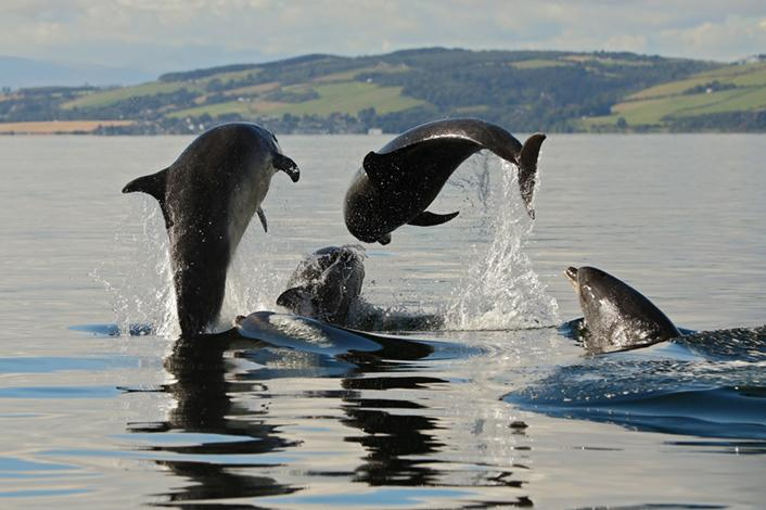 BRITA zrównoważony rozwój współpraca delfiny morze
