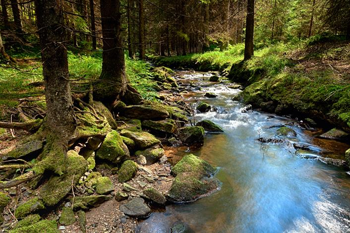 BRITA sustainability river flowing through forest