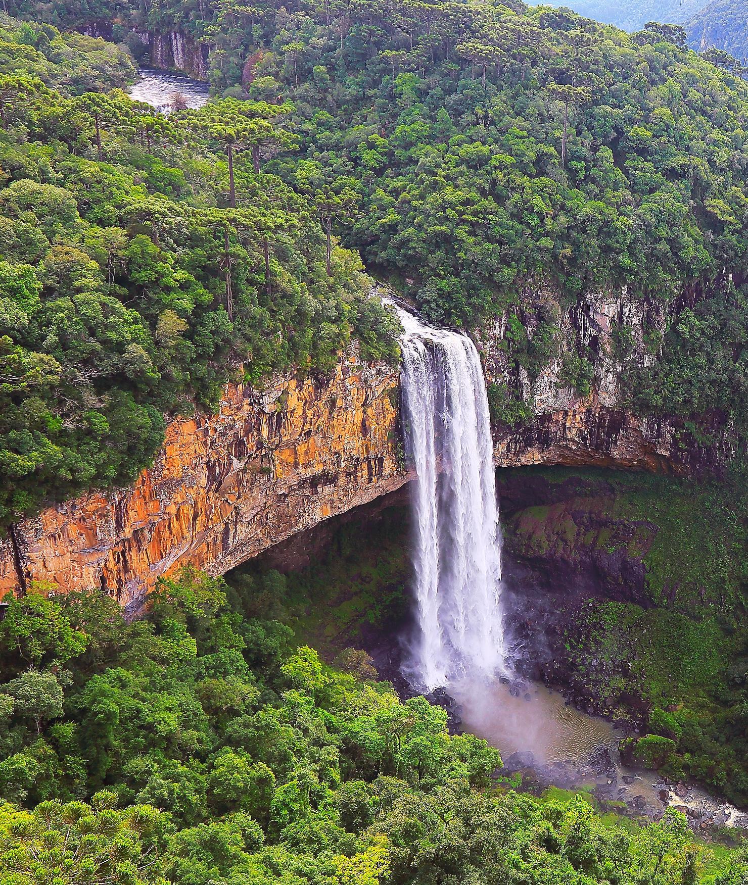 BRITA planeta saudável floresta tropical Brasil