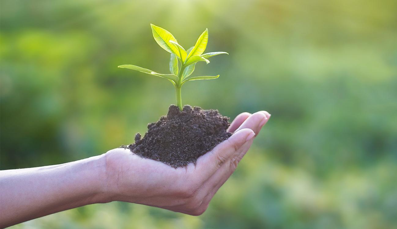 BRITA 永續性 手捧上有植物的泥土