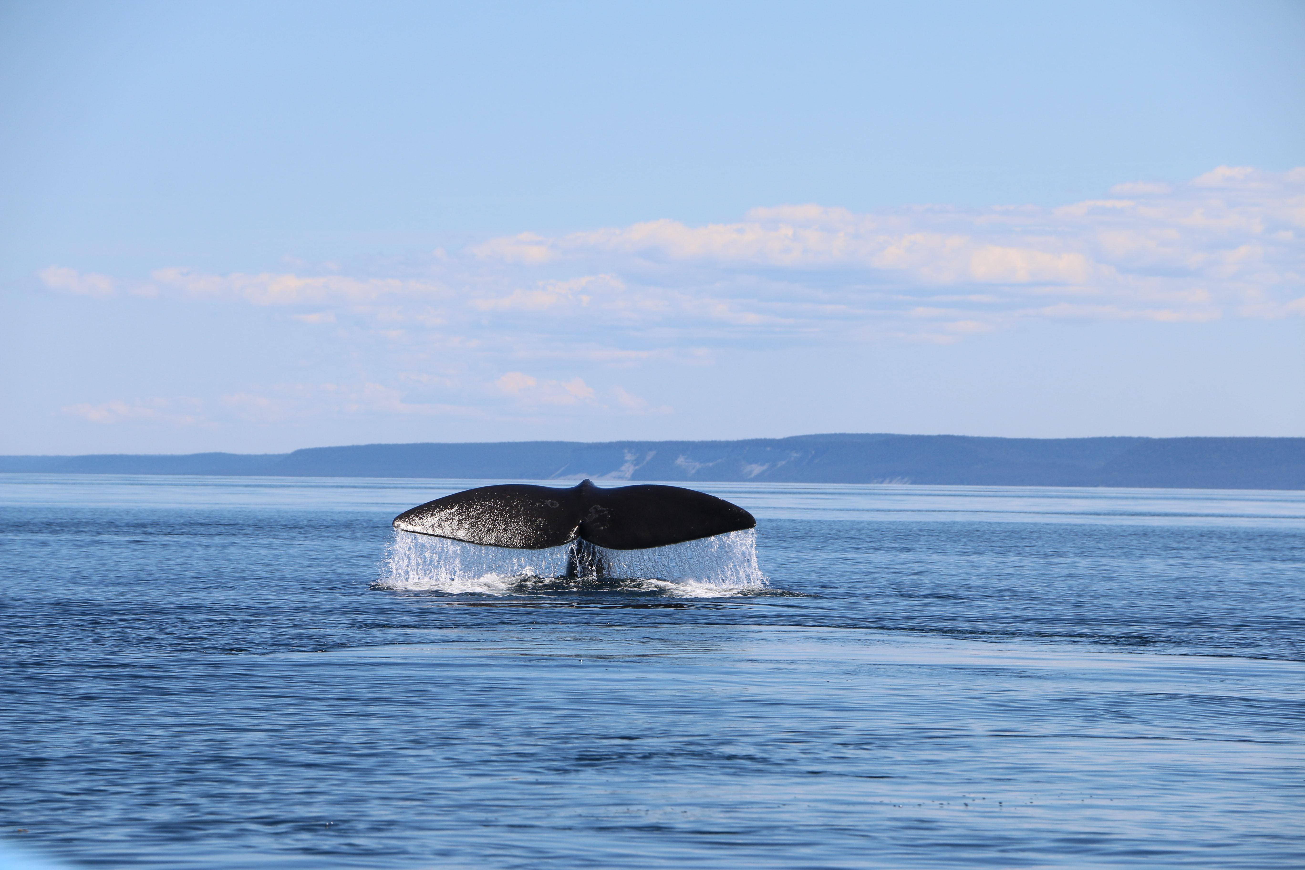 sustainability-ocean-whale